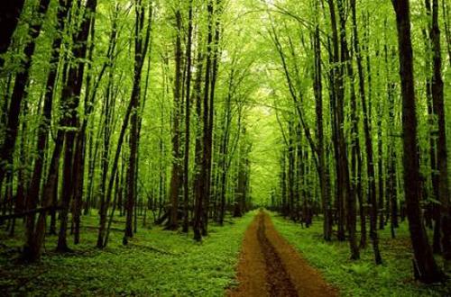 Viajes aventura, senderismo árboles