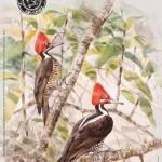 Feria Internacional de Turismo Ornitológico en Monfragüe