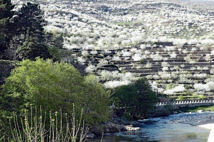 valle-del-jerte02